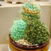 Plush Cactus - San Diego Comic Con 2012