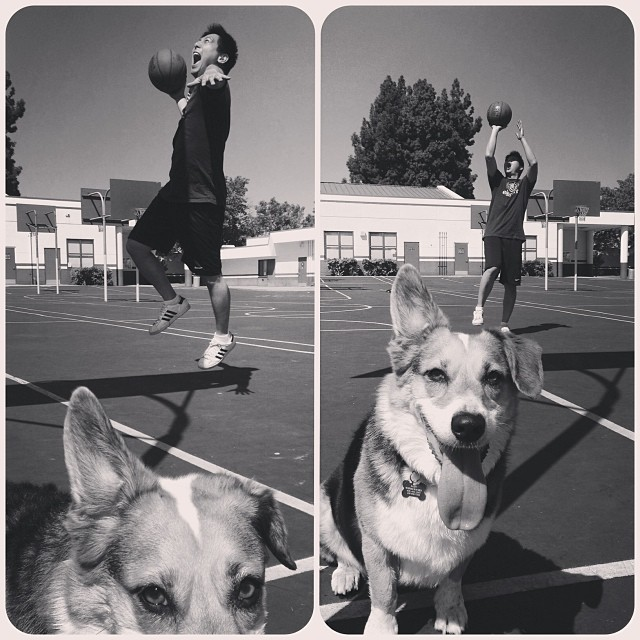 Saturday fun. #corgi #basketball #fun